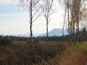 Blick übers Moor zu den Alpen