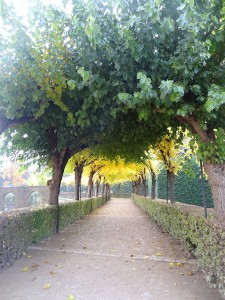 Spalier aus bunten Blättern